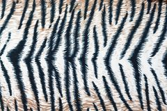 Tiger fabric texture. Close up tiger fabric texture royalty free stock photo