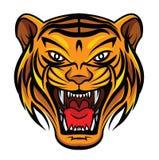 Tiger Face Fotografía de archivo libre de regalías