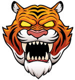 Tiger Face Photos stock