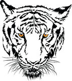 Tiger face black and white with the yellow eye. Stock Photo