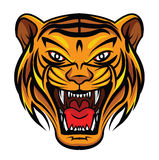 Tiger Face Royalty Free Stock Photography