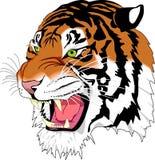 Tiger, Face, Facial Expression, Mammal Stock Photography