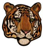 Tiger face Illustration. This is a Tiger face Illustration with clipping path Stock Photos
