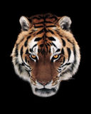 Tiger face isolated at black Stock Photos