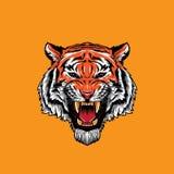 Tiger Face Roaring enojado foto de archivo libre de regalías