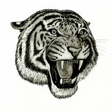 Tiger face roaring. Hand drawing of tiger face roaring Stock Images
