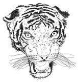 Tiger Face Vector Illustration détaillé Photo stock