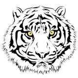 Tiger Face, vettore Fotografia Stock Libera da Diritti