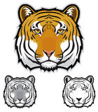 Tiger Faces. Illustration of tiger faces in color, grayscale and black and white Royalty Free Stock Image