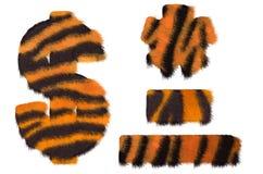 Tiger fell dollar symbol, dash, and asterisk Royalty Free Stock Photo