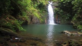 Tiger Fern waterfall. In Cockscomb Basin Wildlife Sanctuary, Belize stock footage