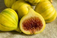 Tiger Figs orgânico amarelo cru fotos de stock royalty free
