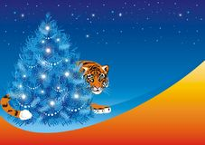 Tiger for fir tree, symbol 2010 year Stock Photography