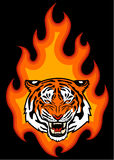 Tiger and fire. Tiger head on fire illustration for tattoo or your design Stock Image