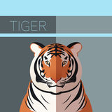 Tiger flat postcard Royalty Free Stock Photo