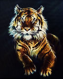 Tiger Fractal beautiful color ornaments background Stock Photo