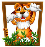 Tiger and frame Stock Image