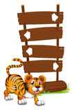 Tiger in front of a wooden signboard Stock Images
