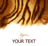 Tiger fur. Texture isolated on a white background Royalty Free Stock Photo