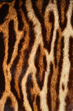 Tiger Fur Imágenes de archivo libres de regalías