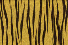 Tiger fur. Tiger - animal fur Royalty Free Stock Image