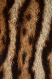 Tiger fur background Royalty Free Stock Photos