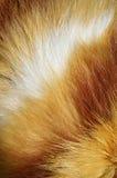 Tiger fur background Stock Photos