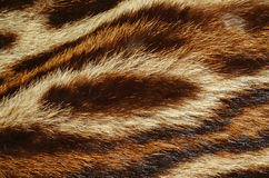 Tiger fur background Stock Images