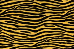 Tiger fur background texture. Close up view royalty free stock photo