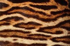 Tiger fur. Closeup of tiger fur background Stock Photo