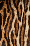 Tiger fur Stock Image