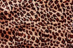 Tiger fur texture Royalty Free Stock Image