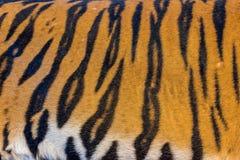 Tiger Fur, Tiger Leather Lizenzfreie Stockfotos