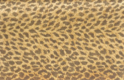 Tiger fur wallpaper Royalty Free Stock Photos