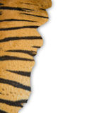 Tiger fur on white background Stock Photography