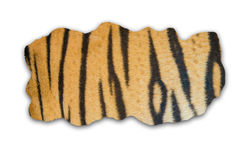 Tiger fur on white background Stock Image