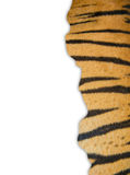 Tiger fur on white background Royalty Free Stock Photo