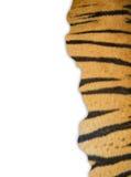 Tiger fur on white background Royalty Free Stock Photo
