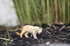 Tiger in a grass landscape royalty free stock photos