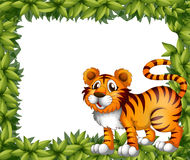 A tiger in green frame Royalty Free Stock Photos