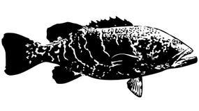 Tiger grouper fish vector. Big predatory saltwater fish caught mostly on dead bait around reefs Stock Photos