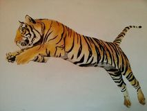 Tiger hand draw. Hand draw of tiger realistic Stock Photo
