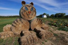 Tiger Hay Stacks - Tag am Bauernhof lizenzfreies stockbild