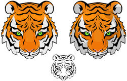 Tiger Head. Small tiger head  drawing, colored and black and white versions Royalty Free Stock Photo