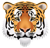 Tiger head. Vector image of tiger head with realistic eyes Royalty Free Stock Images