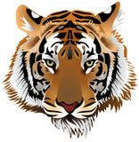 Tiger head royalty free illustration