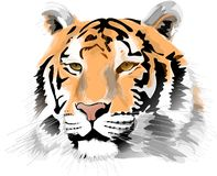 Tiger head Stock Image