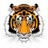 Tiger Head Photographie stock libre de droits