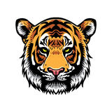Tiger Head Illustration Libre de Droits