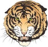Tiger Head Fotos de Stock Royalty Free